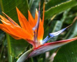 Planta de ave del paraíso